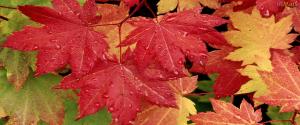 Tendências-em-bolsas-para-outono-inverno
