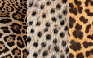 estampas animal print